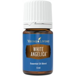 White Angelica, Young...